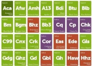 Cannabis -periodic-tabnle-306x220