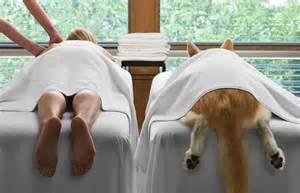 Massage the dog